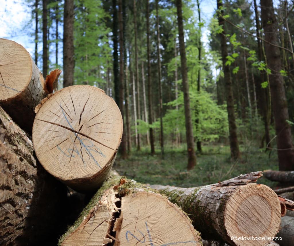 I tronchi tagliati nel parco naturale di Lansberg